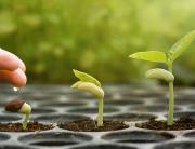 Seed & Growth - Thrive